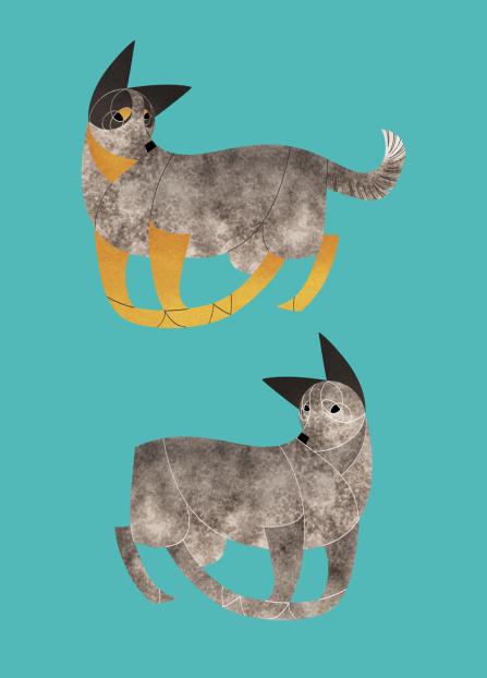 Australian Cattle Dog and Stumpy Tail Cattle Dog