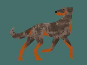 Beauceron (harlequin)