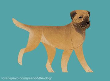 Border Terrier