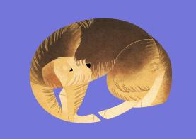 Bosnian Coarse-haired Hound