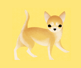 Chihuahua (Short Haired)