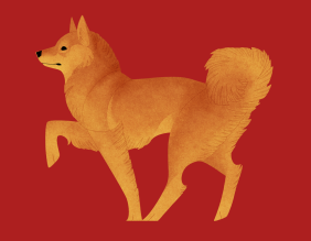 Finnish Spitz