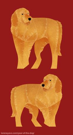 Griffon et Basset Fauve de bretagne