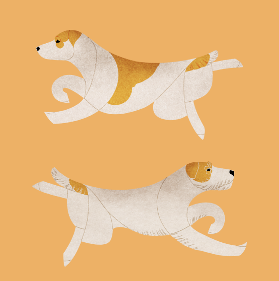Jack and Parson Russell Terrier