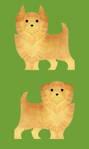 Norwich and Norfolk Terrier