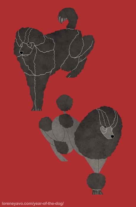 Poodle Caniche