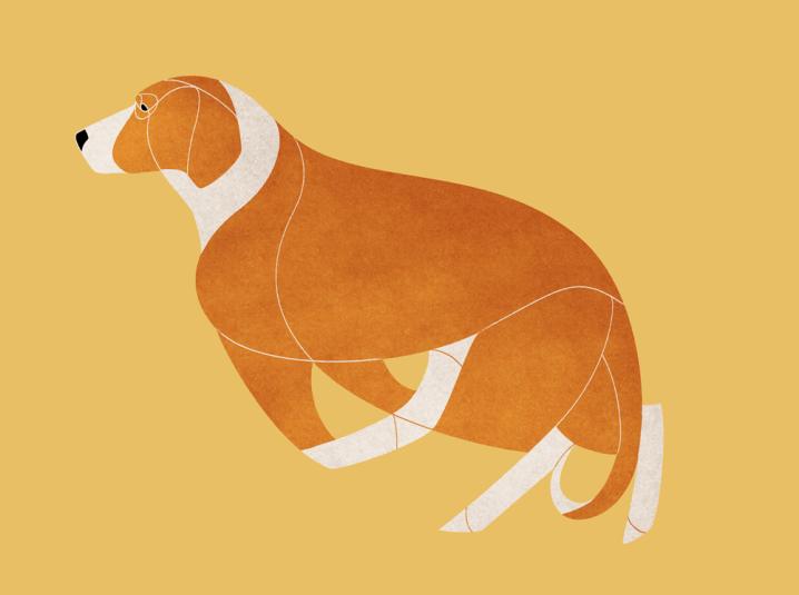 Posavac Hound
