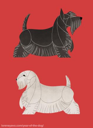 Scottish and Sealyham Terrier
