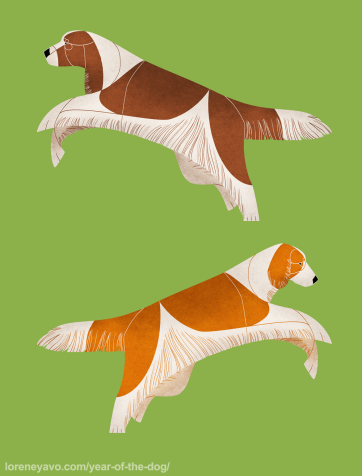 Springer Spaniels
