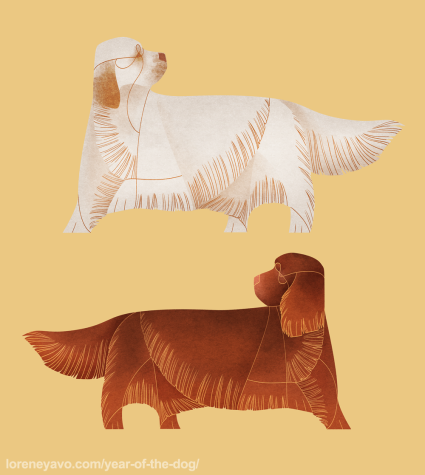 Sussex Clumber Spaniel